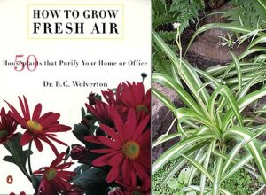 how-to-grow-fresh-air-book-image.jpg
